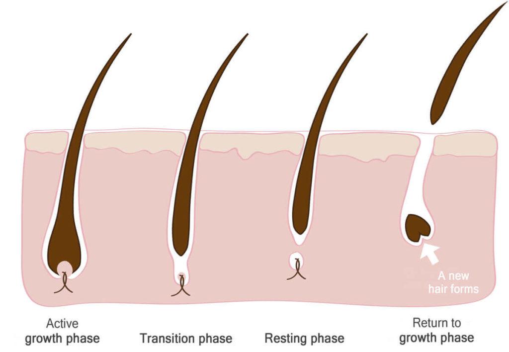 Jak przyspieszyć porost włosów na głowie? - blog o włosach i urodzie - Annively